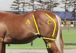 相馬眼 強い馬の見極めポイント トモを見る