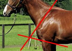 相馬眼 強い馬の見極めポイント 胸を見る