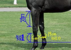 相馬眼 強い馬の見極めポイント 前脚を見る