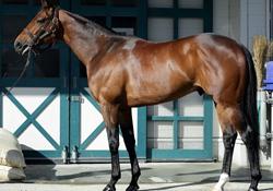 相馬眼 強い馬の見極めポイント 全体のバランスを見る